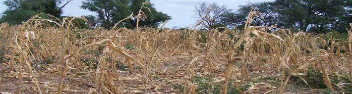 Poor crop yield